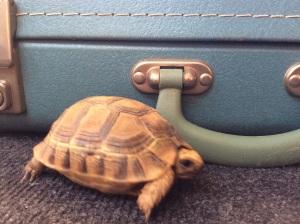 Shellfie wil in valiesje kruipen.